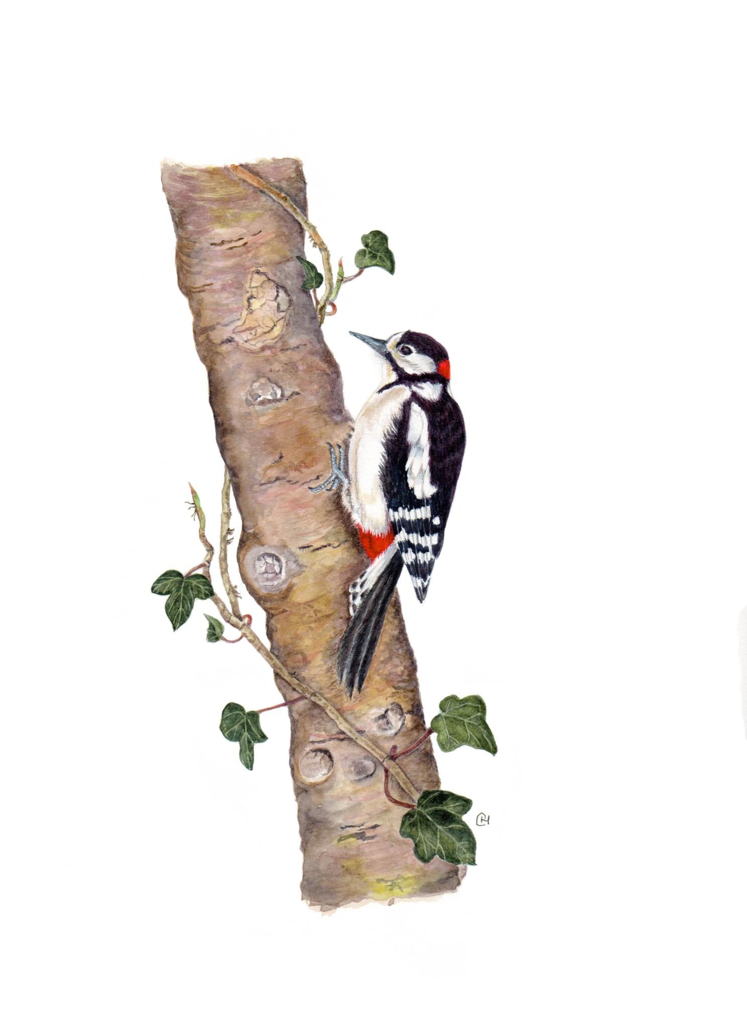 GS Woodpecker done